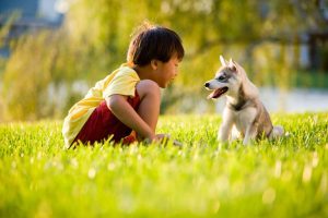 a boy and a dog playing on the green grass